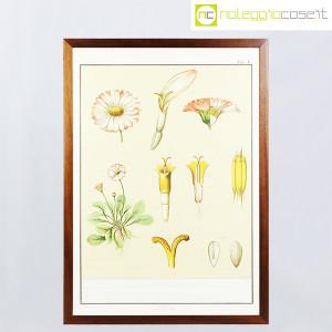 Paravia, tavola botanica n (1)