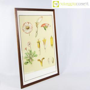 Paravia, tavola botanica n (2)