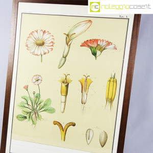 Paravia, tavola botanica n (3)