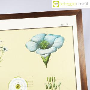 Paravia, tavola botanica n (4)