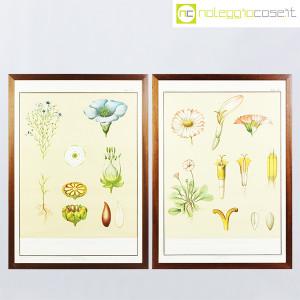 Paravia, tavola botanica n (9)