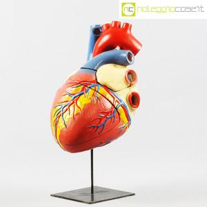 Cuore in gesso, modello anatomico con base (1)