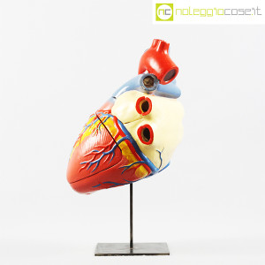 Cuore in gesso, modello anatomico con base (2)