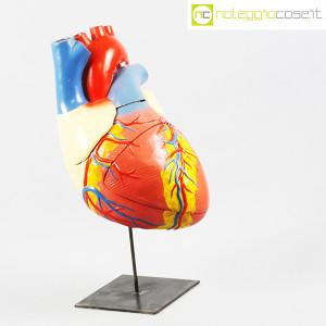 Cuore in gesso, modello anatomico con base (3)
