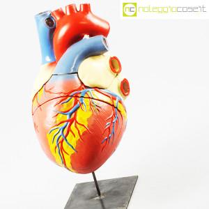 Cuore in gesso, modello anatomico con base (4)