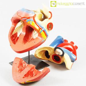 Cuore in gesso, modello anatomico con base (5)