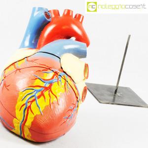 Cuore in gesso, modello anatomico con base (6)