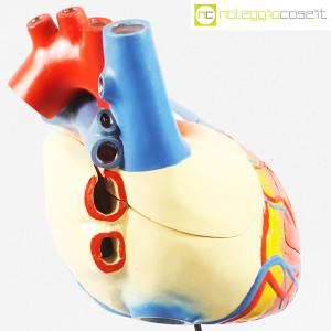 Cuore in gesso, modello anatomico con base (7)