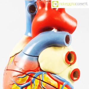 Cuore in gesso, modello anatomico con base (8)